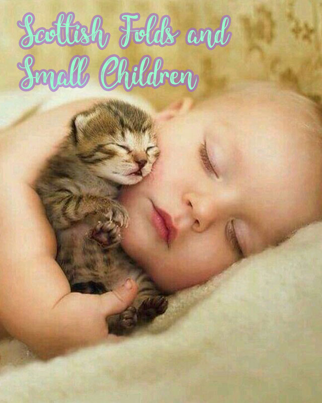 scottish folds and small children in the home - Pictures Of Small Children